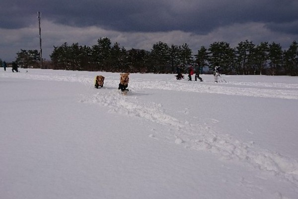 愛犬と行くスノーシュートレッキング